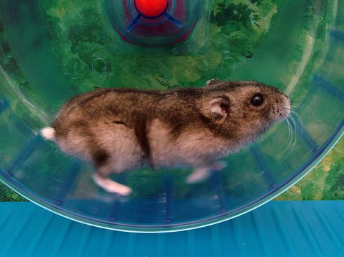 hamsterwill2